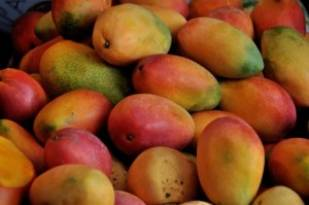 A pair of Japanese mangoes fetches $3,000