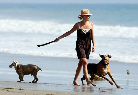 Charlize Theron is definitely a dedicated pet lover. Denver and Delilah are her favorite cocker spaniels