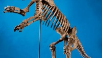 Giant Groth Skeleton up for sale for a price of $450k