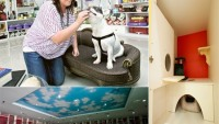 Urban Tail Pet resort offers 7-star luxury for your pooches and kitties