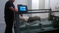 $40,000 Underwater dog treadmill and other luxury items for pets