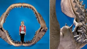 World's largest set of shark jaws hits the auction block