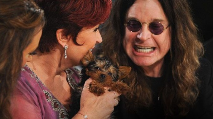 Recently Ozzy Osbourne has paid $10,000 in an auction for an eight-week old Yorkshire terrier.