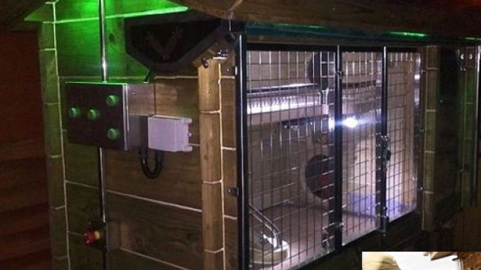 Couple builds $15,650 luxury hutch for their two rabbits: Playboy life indeed!